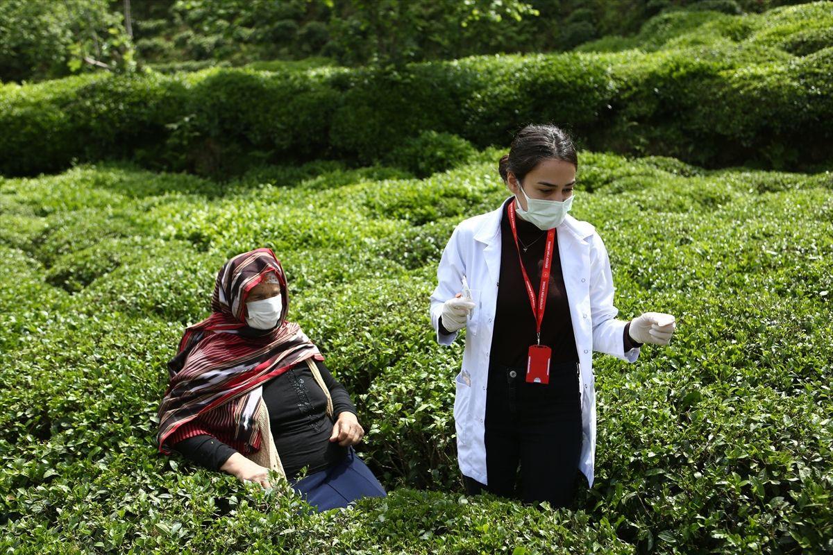 Trabzon'da sağlık çalışanları çay tarlasında aşı yaptı çarpıcı fotoğraflar