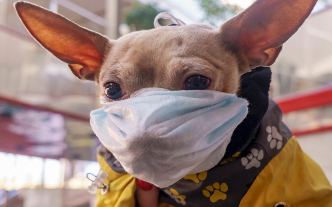Rusya'da koronavirüse karşı hayvanlar da aşılanıyor