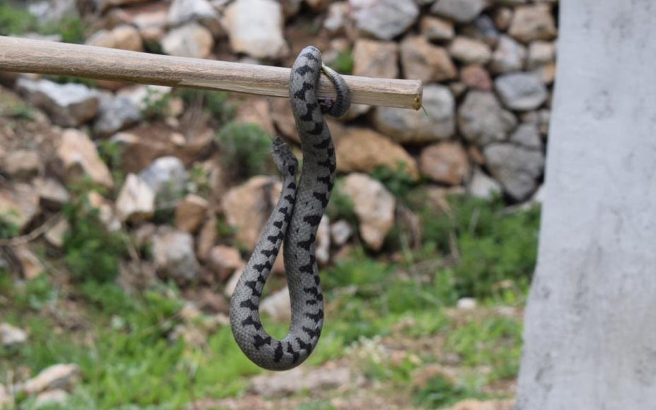 Nesli tehlike altında! Sivas'ta görüldü: İnsanların gözüne...