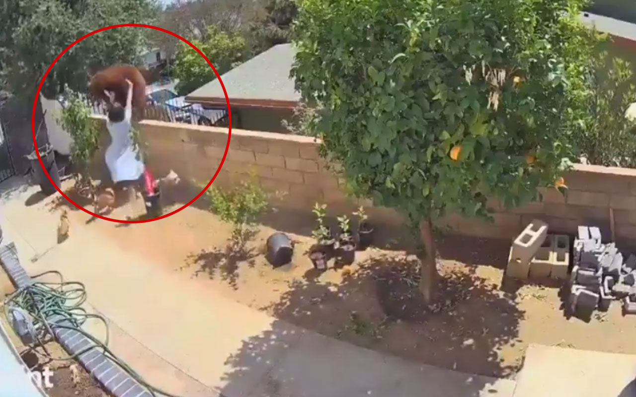 Köpekleri için bahçesindeki ayıya saldırdı