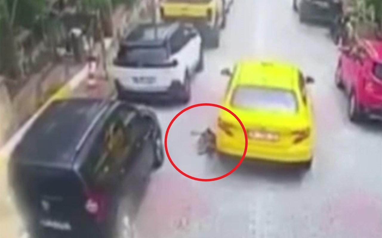 İstanbul Eyüpsultan'da vicdansız taksi sürücüsü köpeği ezip kaçtı