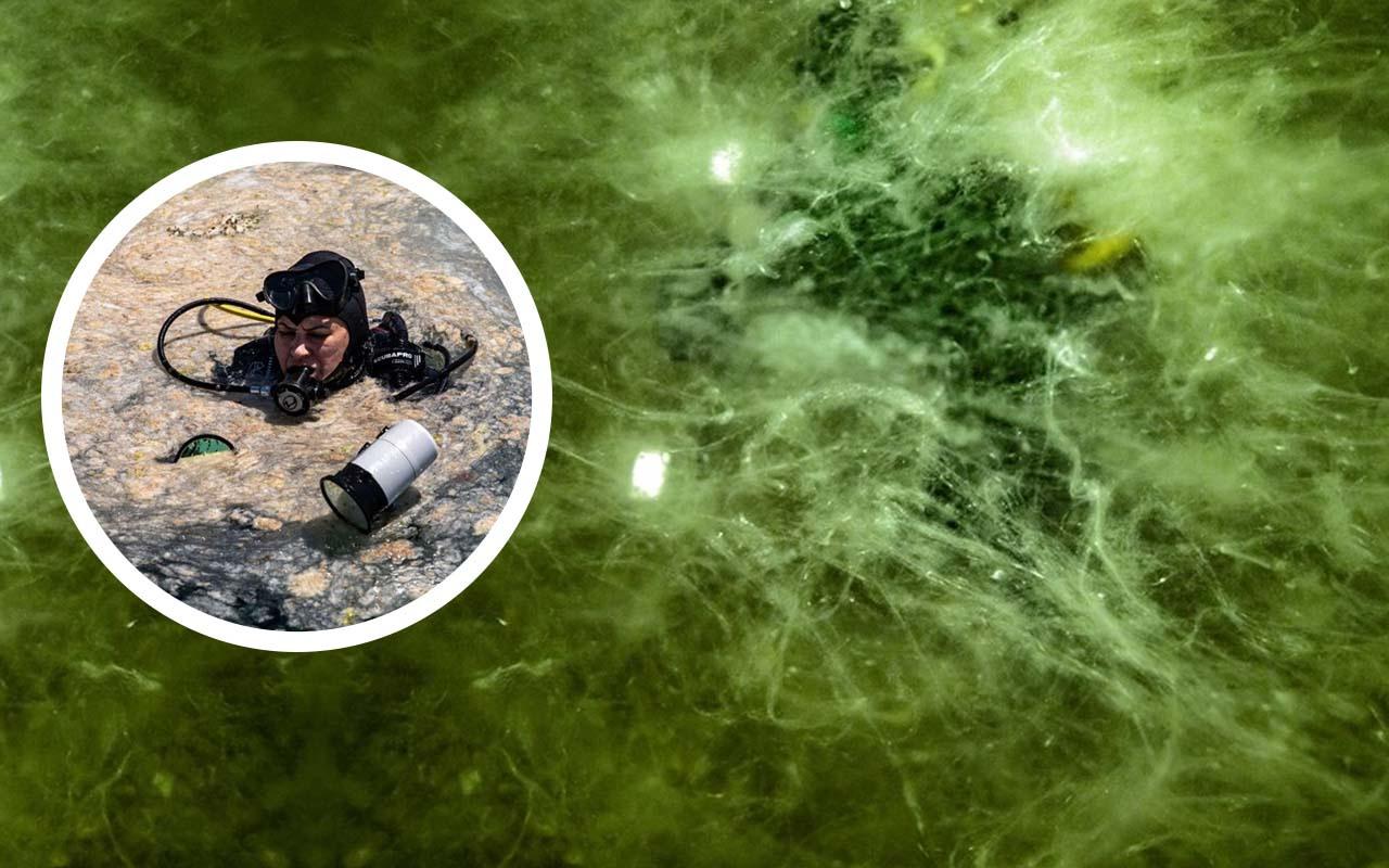 Marmara Denizi'nin dibi örümcek ağı gibi! Müsilaj yoğunluğu böyle görüntülendi