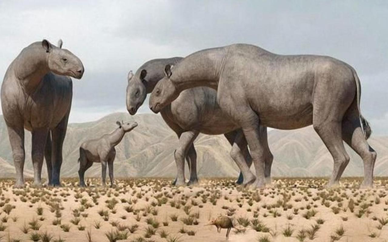 Bilim insanları açıkladı! Yeni tür keşfedildi: 4 fil ağırlığında 7 metre uzunluğunda