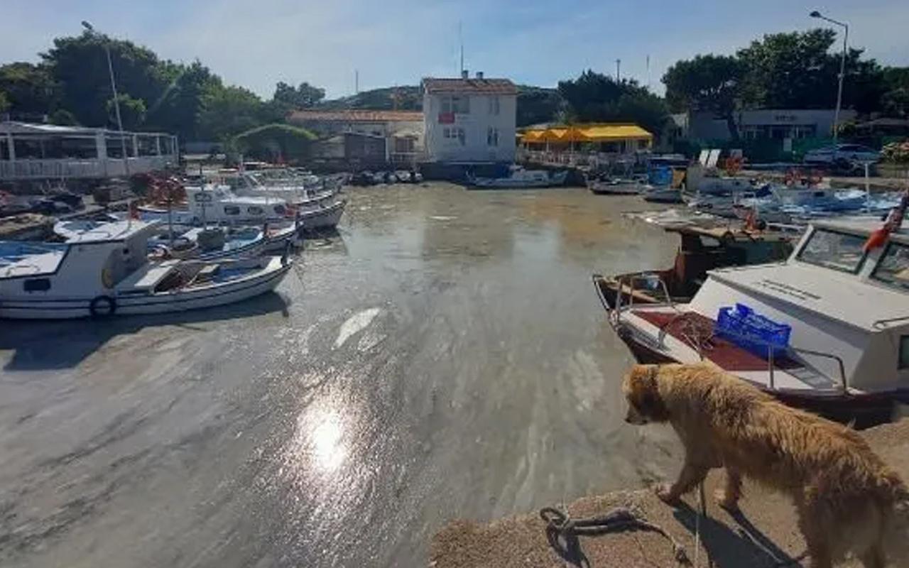Bozcaada'da müsilaj görüldü! Adalılar bu görüntüye kahroldu!