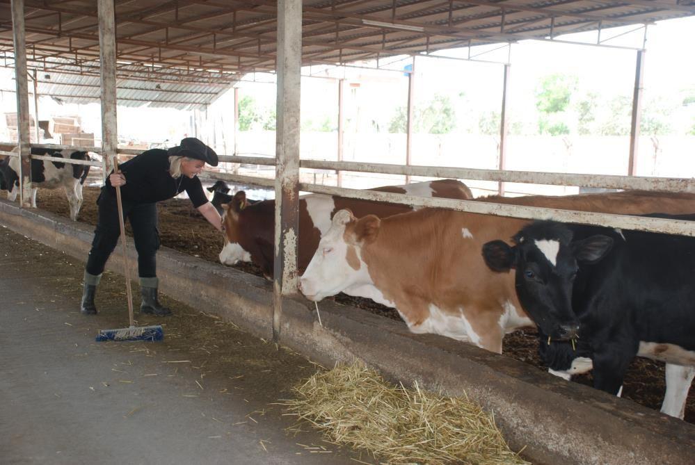 Hostesliği bıraktı İzmir'de çiftlik kurdu şimdi inek sağıp ahır temizliyor