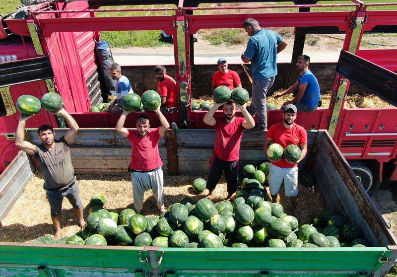 Adana'da sıcağın altında günde 200 ton karpuz yüklüyorlar