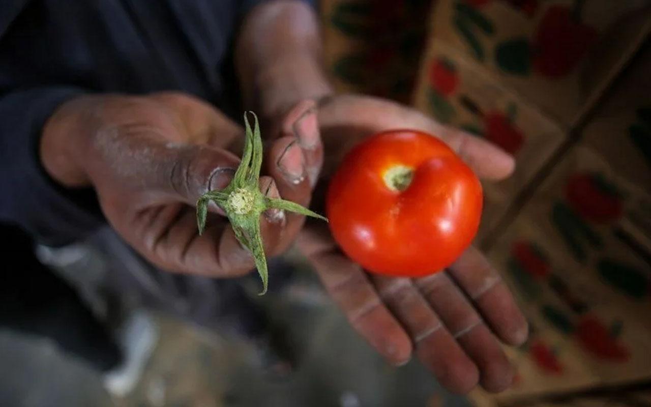 İsrail, domates sapını tehdit gördü! Pes dedirten karara tepki yağdı