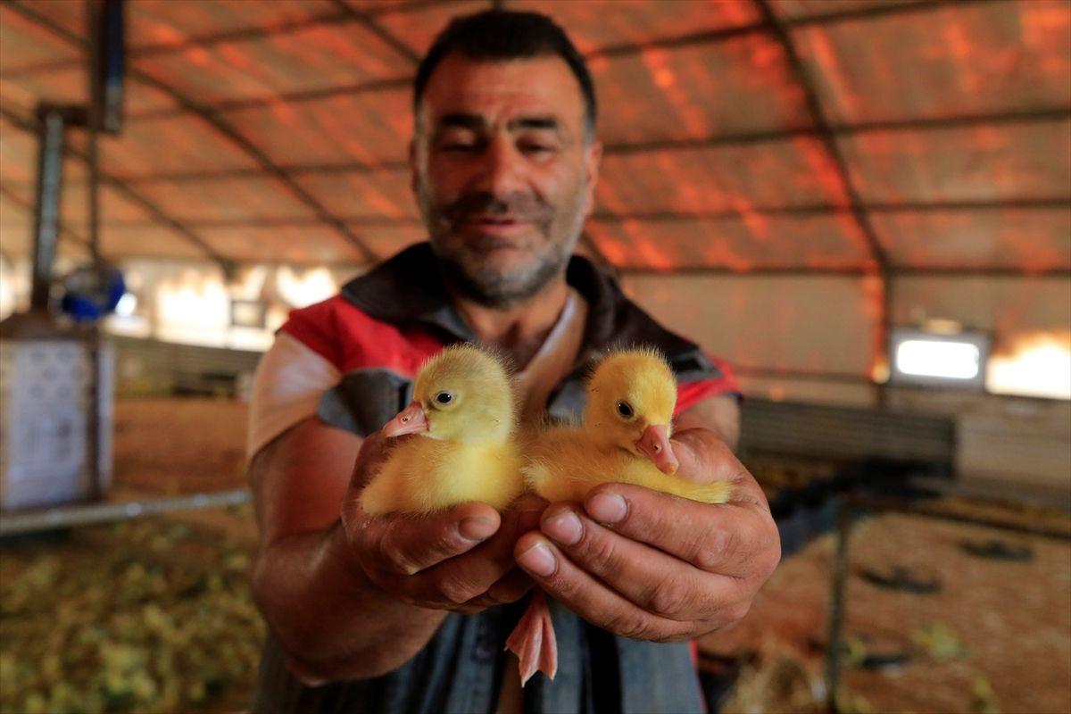 Böyle çiftlik görülmedi Erdoğan'ın çağrısıyla Elazığ'da kurdu üretimi 100 kat artırdı