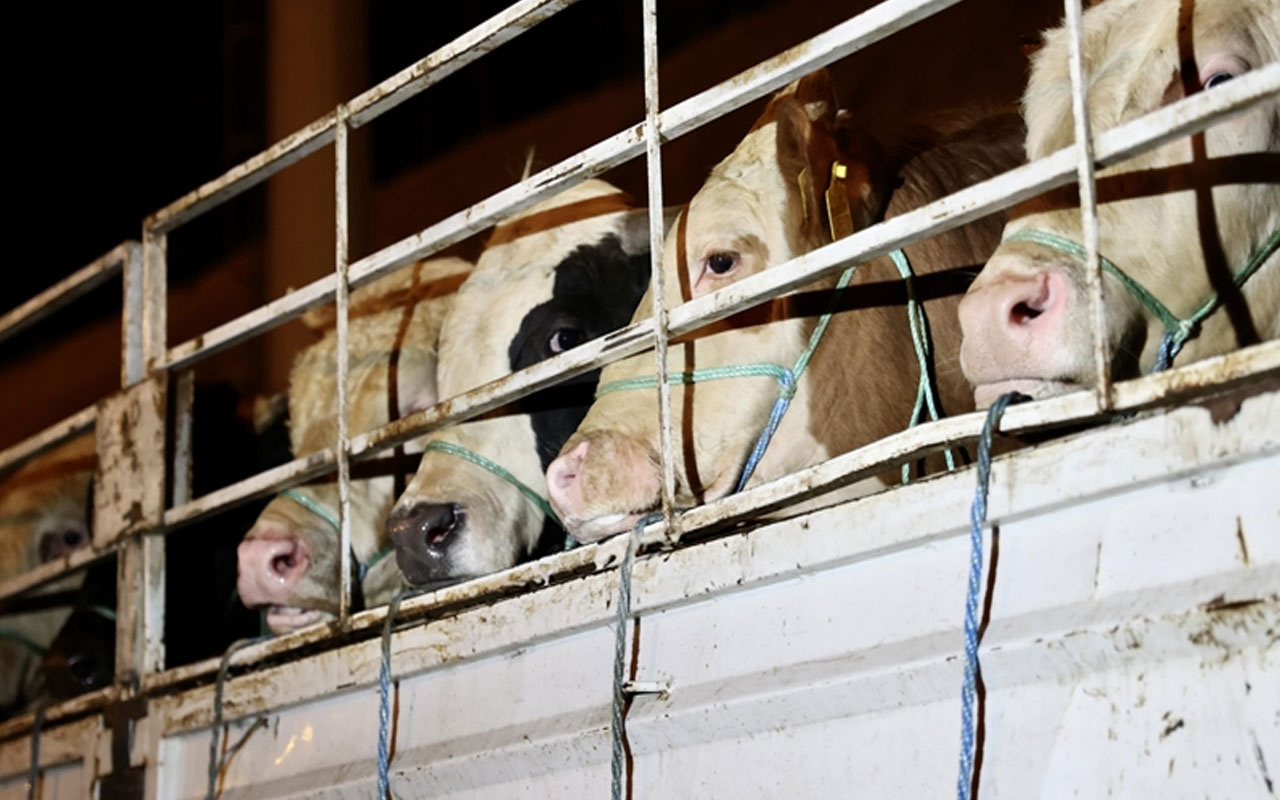 Sağlık Bakanlığı kurbanlık hayvanlardan geçebilecek hastalıklara karşı uyardı
