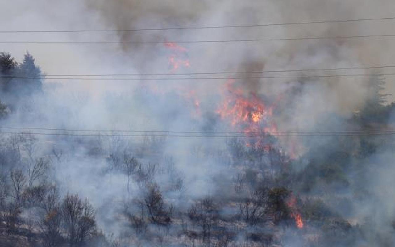 Antalya Muğla'dan sonra Kocaeli'de orman yangını! Çok sayıda ekip sevk edildi