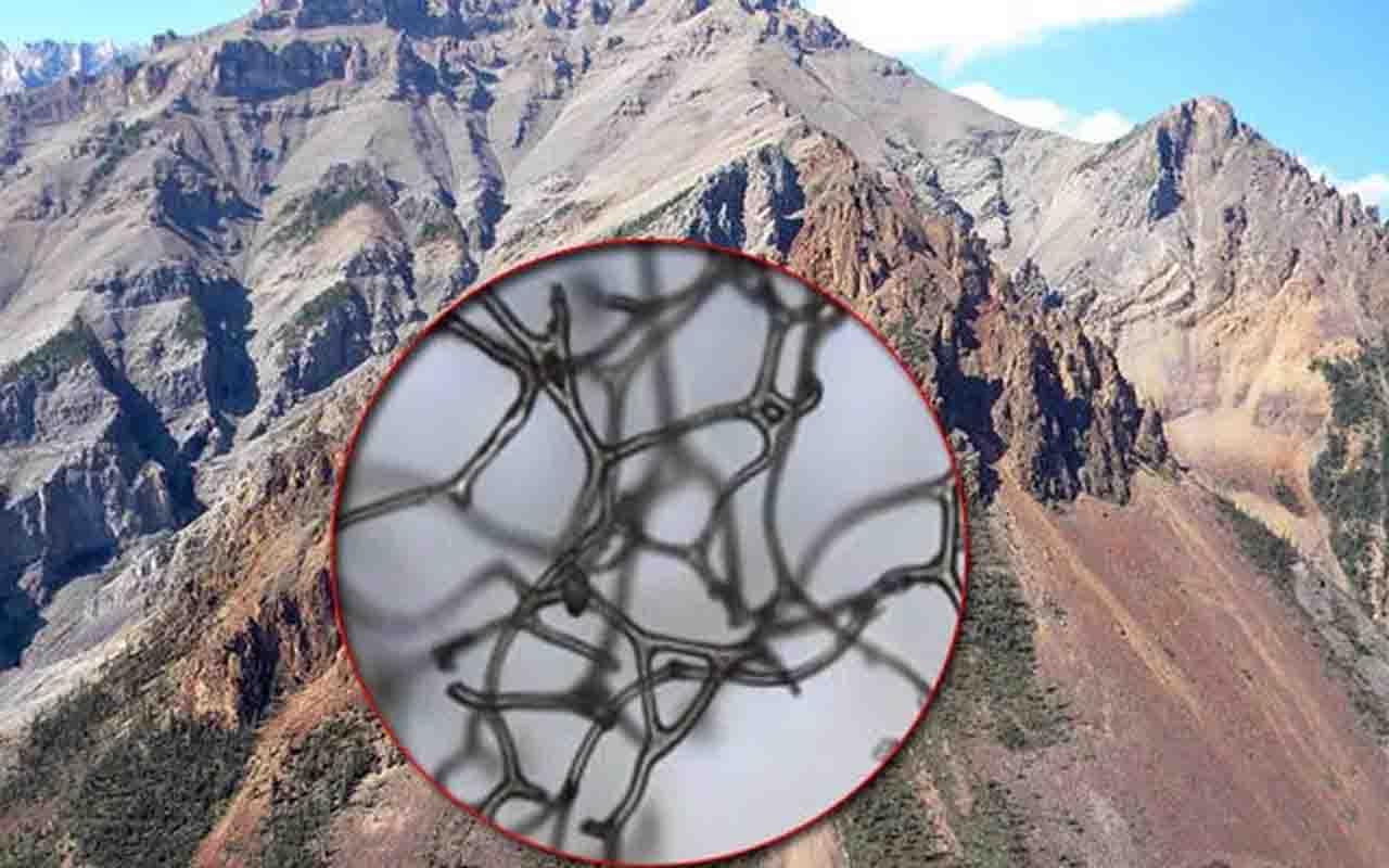 Kanada'da 890 milyon yıllık dev keşif! Dünyanın en eski hayvan fosili bulundu