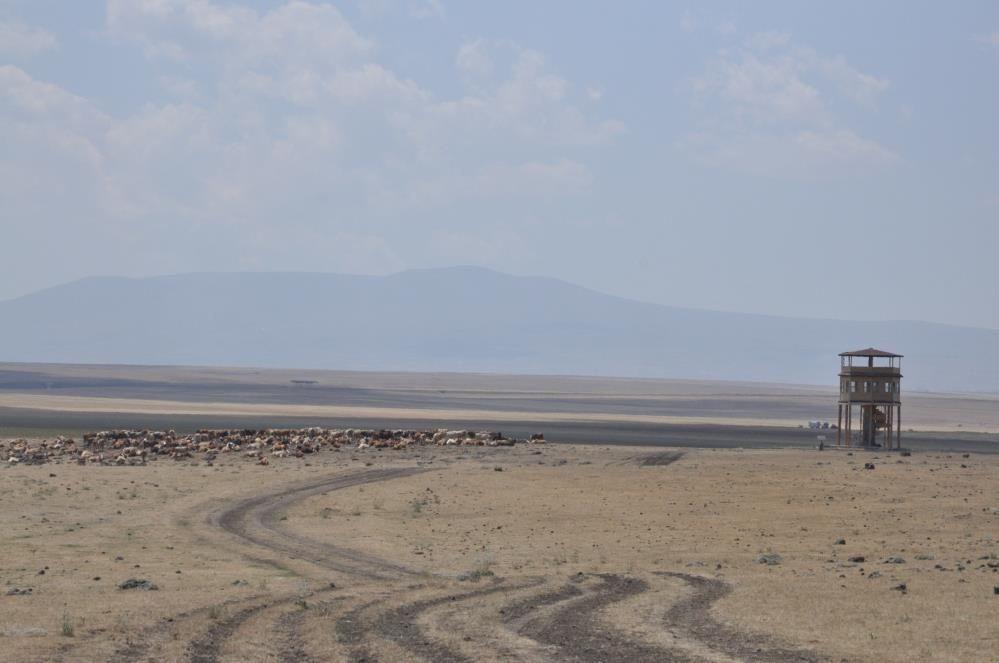 Kars'ta kuş cenneti Kuyucuk Gölü tamamen kurudu! Artık kuş da yok su da