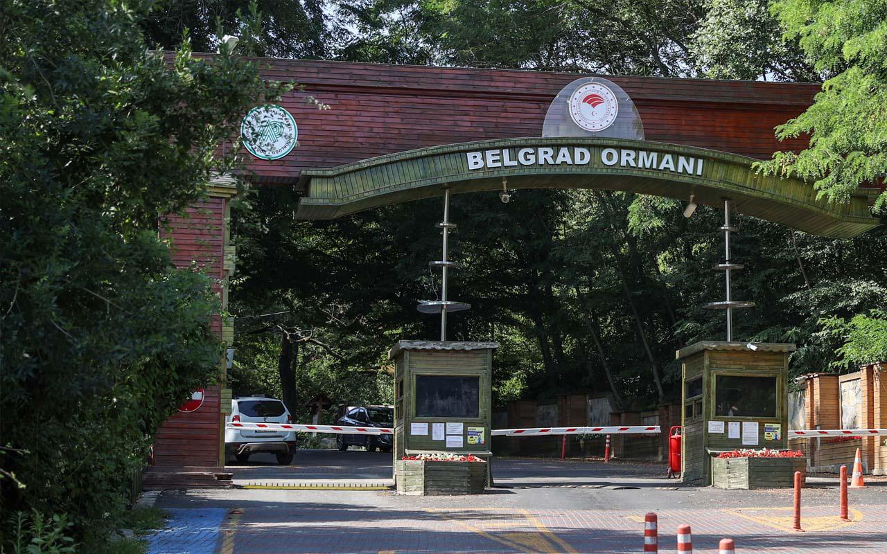 İstanbul'da yasak geldi! Yaz sonuna kadar ormanlara girilemeyecek!