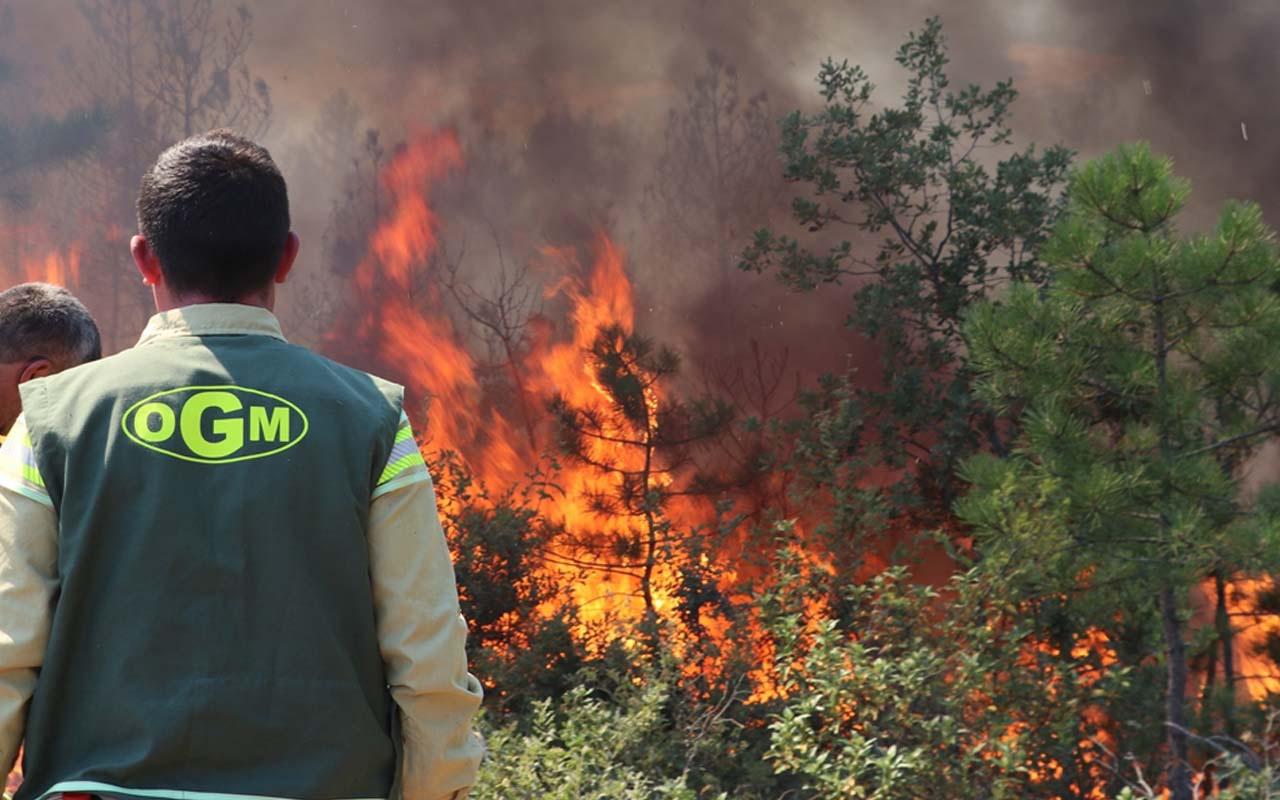 Kastamonu Taşköprü'de orman yangını