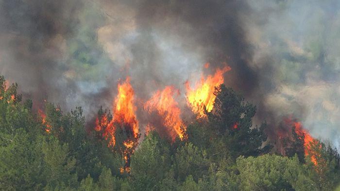 Uşak'ta orman yangını çıktı! Hızla yayılıp evlere sıçradı