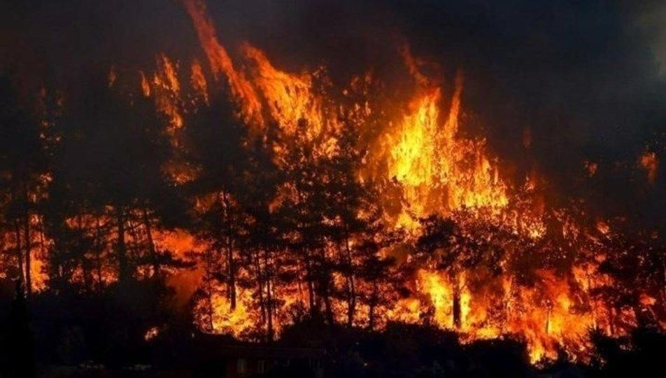 Yangın sonrası yeşillendirme seferberliği başladı! İşte markaların yaptığı yardımlar...