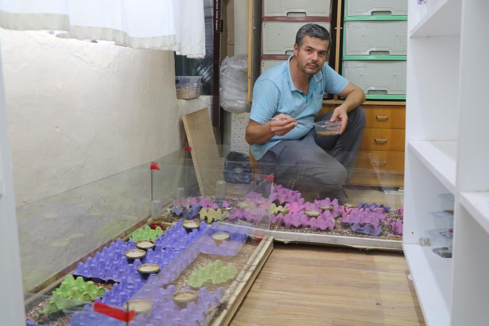 300 akreple başladı gramı 71 bin TL! Malatya'daki tesiste hedef yurt dışı