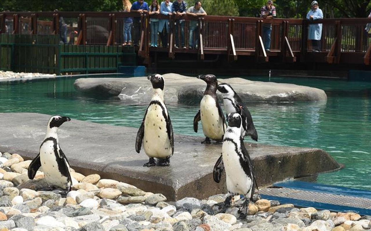 Antalya Hayvanat Bahçesi yangın önleme tedbirleri kapsamında ziyarete kapatıldı