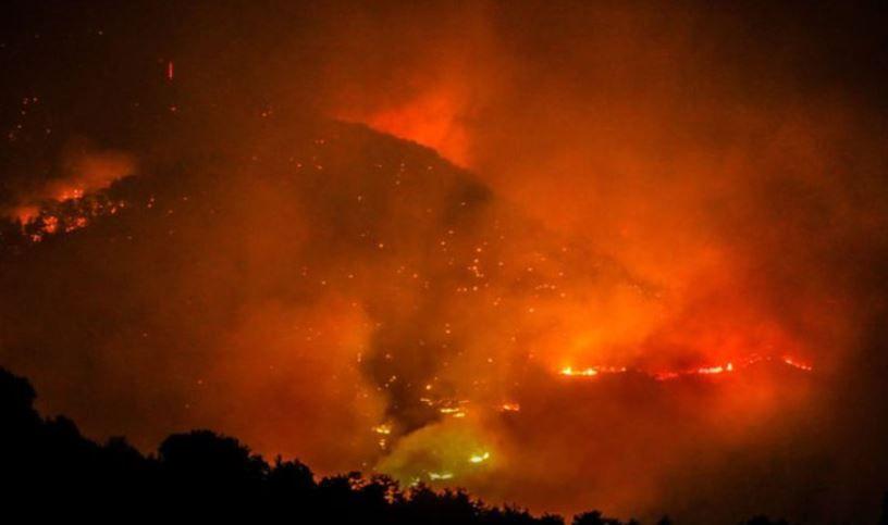 Milas yangınında çekildiği yer kül oldu! 'Mandıra Filozofu' Müfit Can Saçıntı'dan ağlatan paylaşım