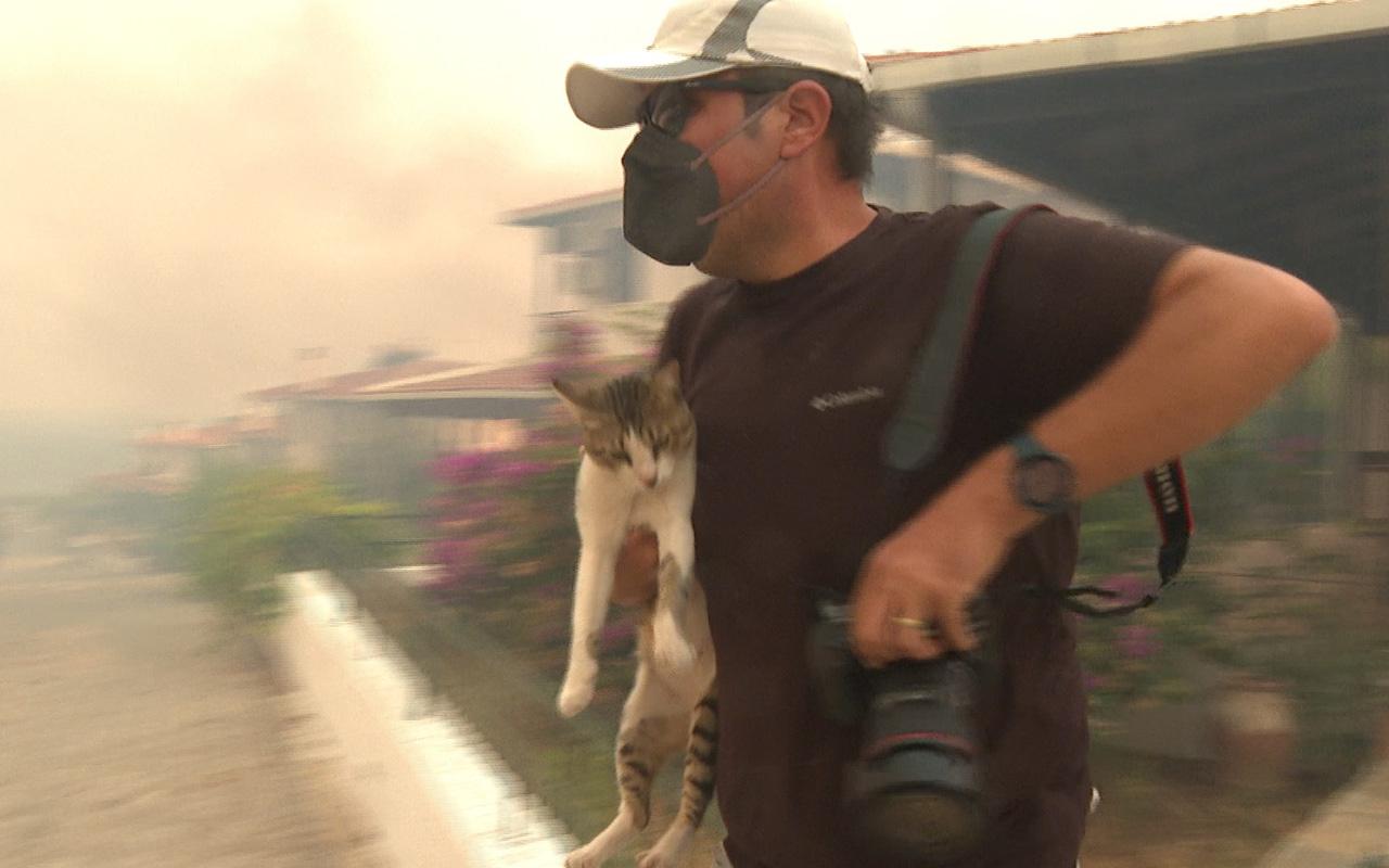 Muğla Milas'taki yangında mahsur kalan kediyi gazeteciler kurtardı