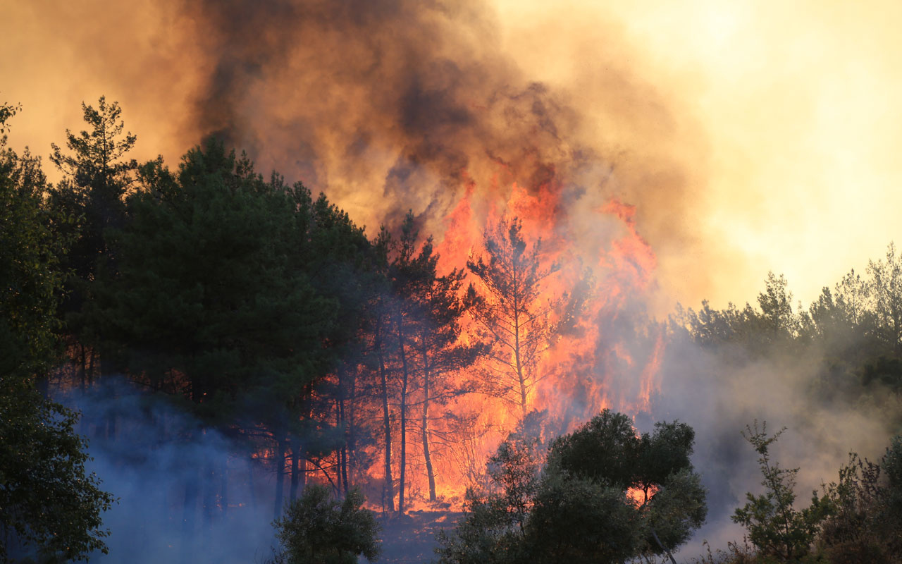 Milas'tan son dakika haber! Orman yangını termik santrale girdi sirenler çalıyor