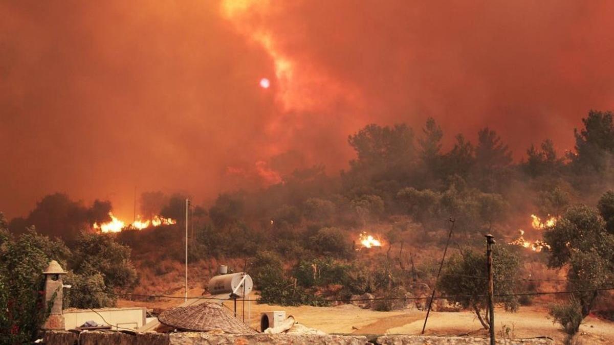 Denizli'de bu ormanda 30 yıldır yangın çıkmadı! Sebebi bakın ne? Türkiye'ye örnek olsun