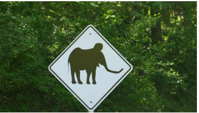 Nesli tükenen yünlü mamutlar yeniden doğacak! Küresel ısınmaya karşı adım atıldı