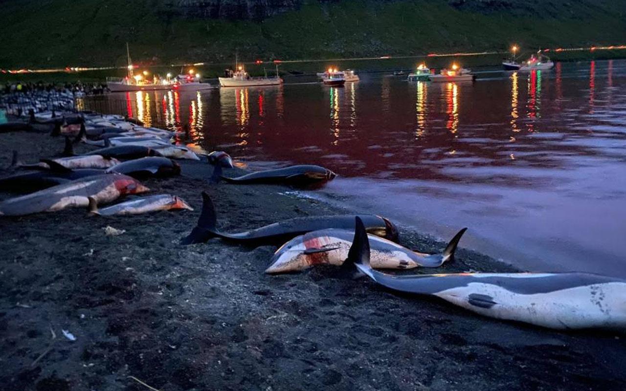 """Faroe Adaları'ndaki """"festival"""" bu yıl da tepki çekti! Bin 428 balina ve yunus öldürdüler"""