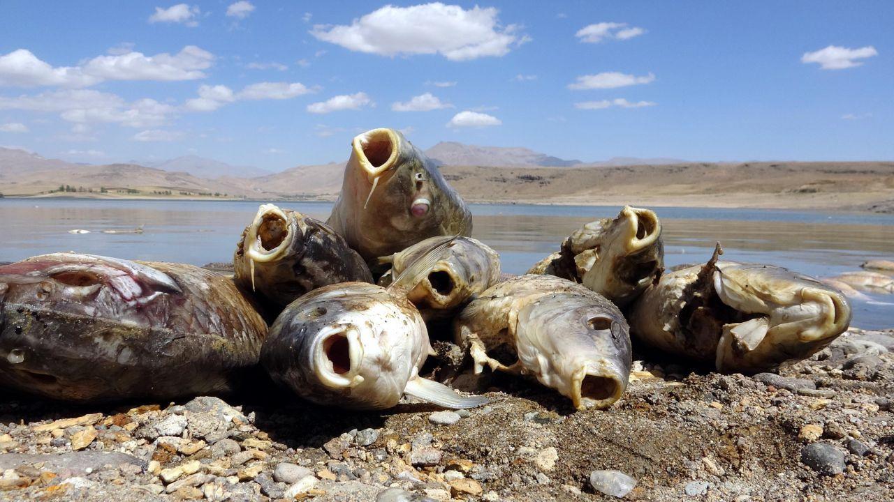 Van Koçköprü Baraj Gölü'nde korkutan görüntü! Balık ölümlerinin nedeni belli oldu