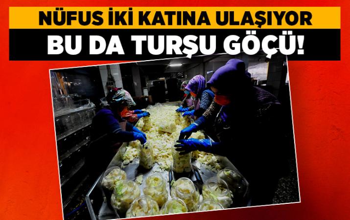 Turşu göçü Bursa Orhangazi'deki mahallede nüfusu ikiye katlıyor