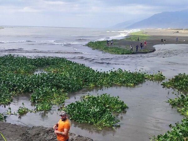 Su canavarları denizi istila etti! Hatay'da görenler şaştı kaldı: Bir an önce temizlenmeli