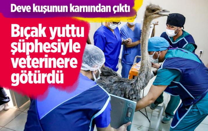 Diyarbakır'da bıçak yuttu şüphesiyle deve kuşunu veterinere götürdü karnından çıkanlara inanamadı